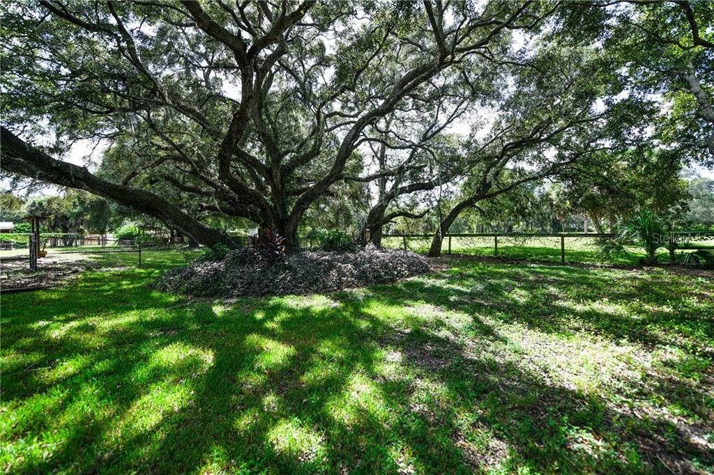 Picture perfect oak trees. - Single Family Home for sale at 2045 Frederick Dr, Venice, FL 34292 - MLS Number is A4416740