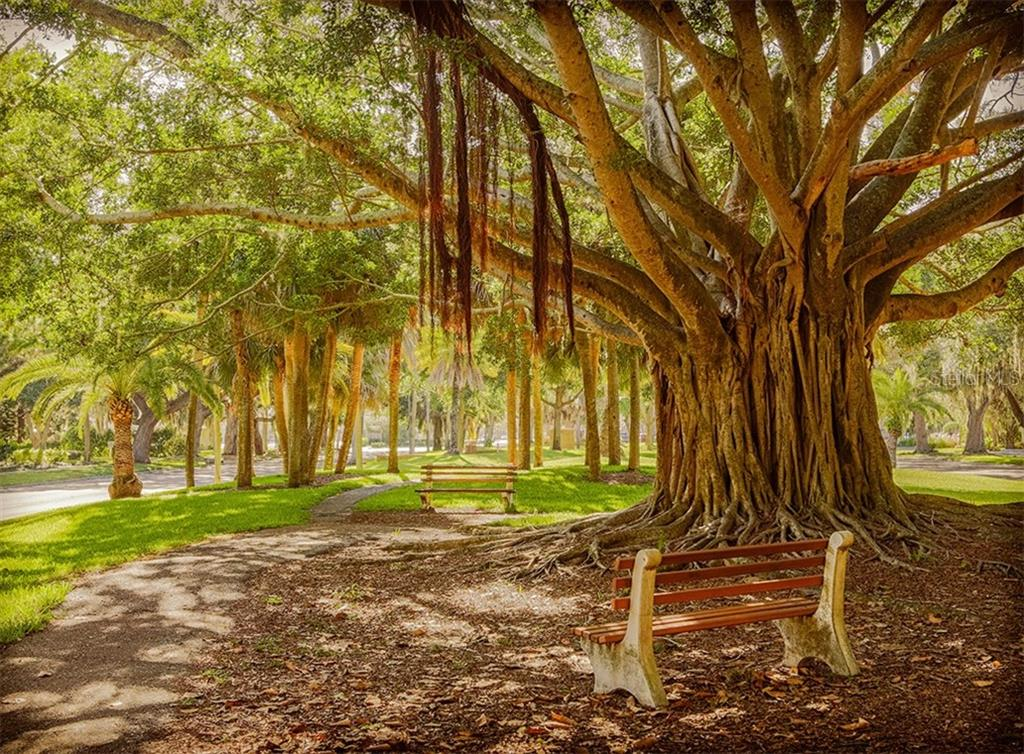 Banyan tree on Venice Ave - Condo for sale at 167 Tampa Ave E #313, Venice, FL 34285 - MLS Number is N6112536